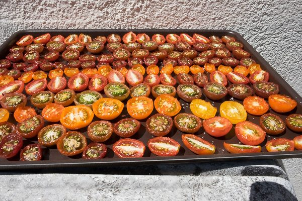 Tomatoes drying in the sun