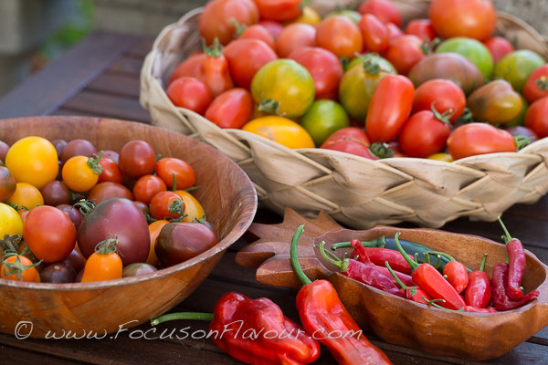 Tomatoes Galore